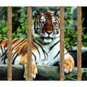 Ben jij een tijger in een kooi van stro
